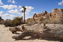 Joshua Tree - USA - Californie - California