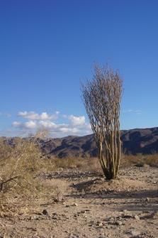 Joshua Tree - USA - Californie - California