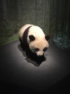 Espèces d'ours - Muséum d'histoire naturelle