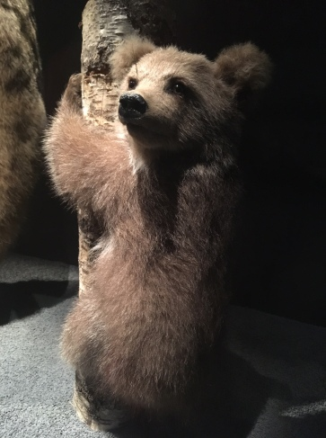 Especes d'ours-4