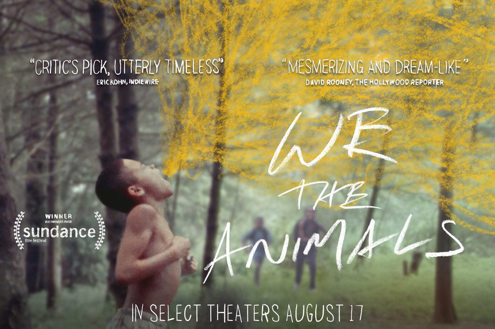 we the animals ; critique, avis ; deauville